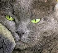 Occhi di Smeraldo