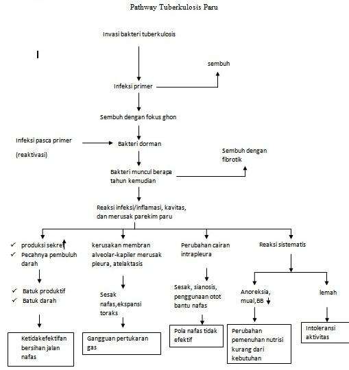 Gambar Pathway Tuberculosis Paru