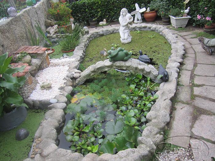 agua c mo mantener limpia el agua en un macet n foro