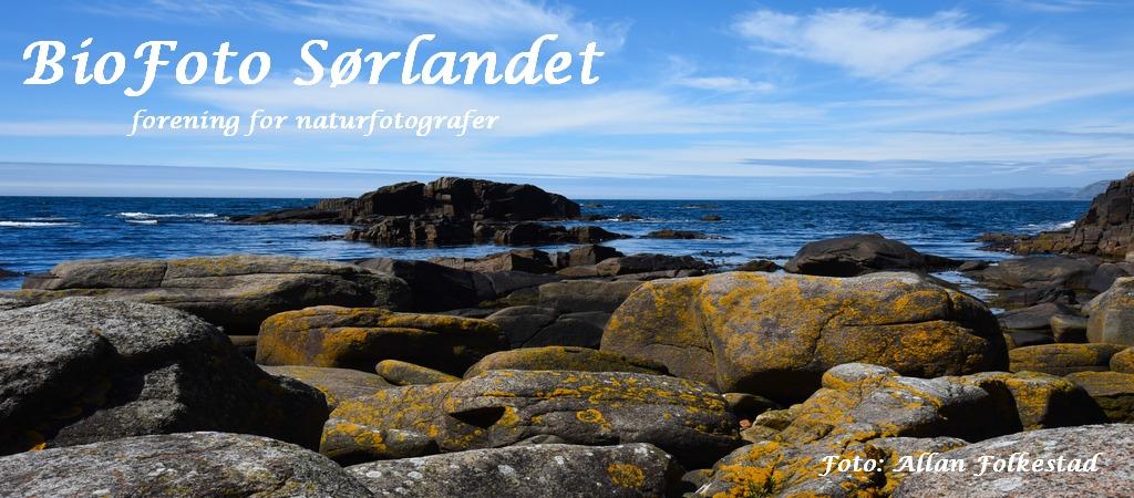 BioFoto Sørlandet