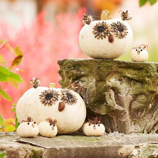 owl hallowen pumpkins