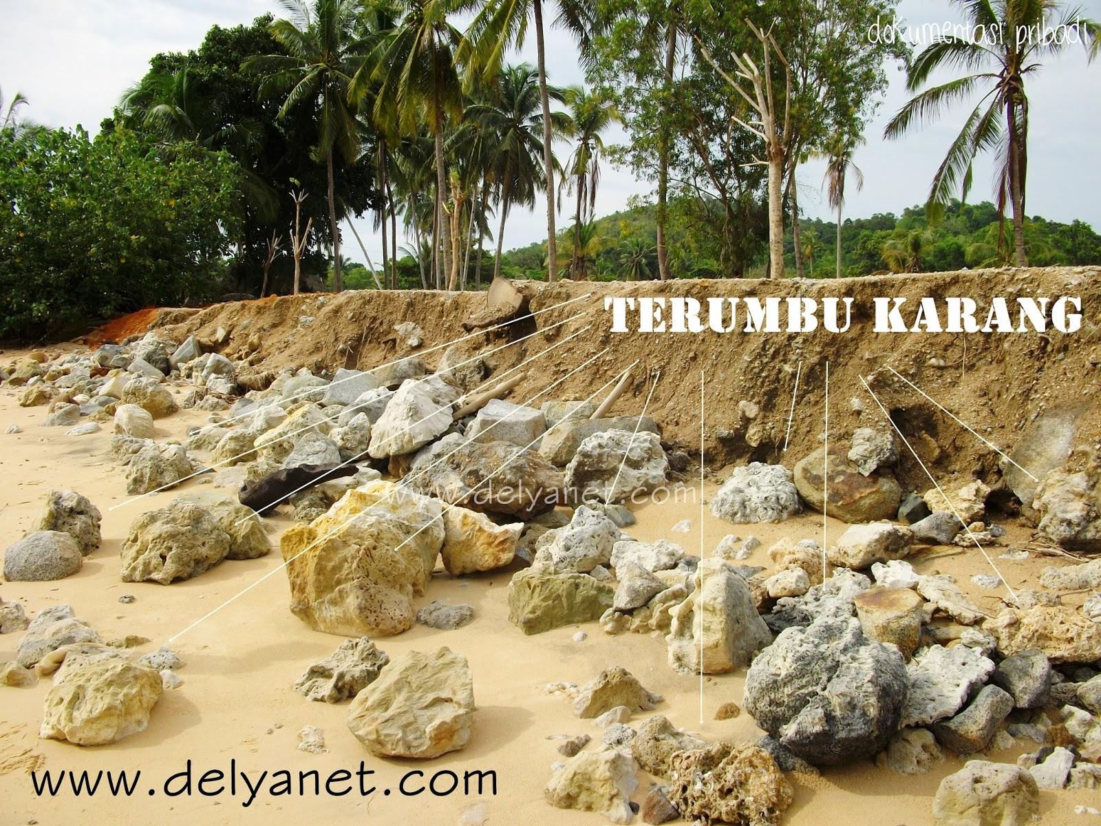 Terumbu karang yang rusak oleh manusia