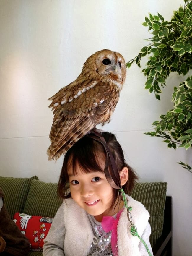"Owl cafes like Fukurou no Mise ""Owl Shop"" and so far more owl cafes opened in Tokyo, such as Fukurou Sabou ""Owl Teahouse"" and Osaka – Owl Family."