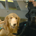 Θεραπευτικοί σκύλοι στη δίκη στο Κολοράντο...