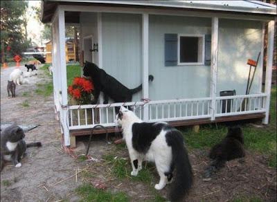 perkampungan kucing Caboodle Ranch di Florida