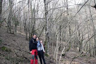 Bosque en camino de Ochagavia