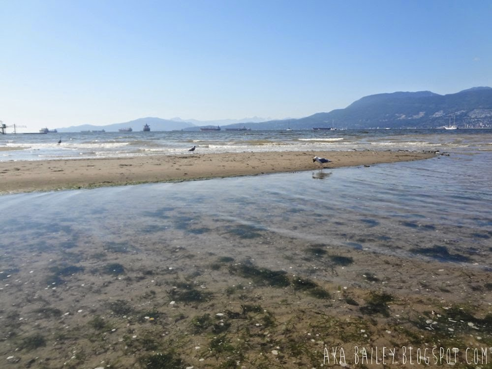 Birds in the water at Kilstano Beach in Vancouver, English Bay