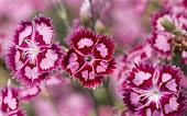 สุขภาพจิตดีมีดอกไม้สวย