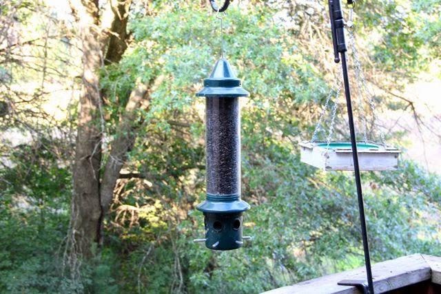 bird feeder full of black sunflower seeds