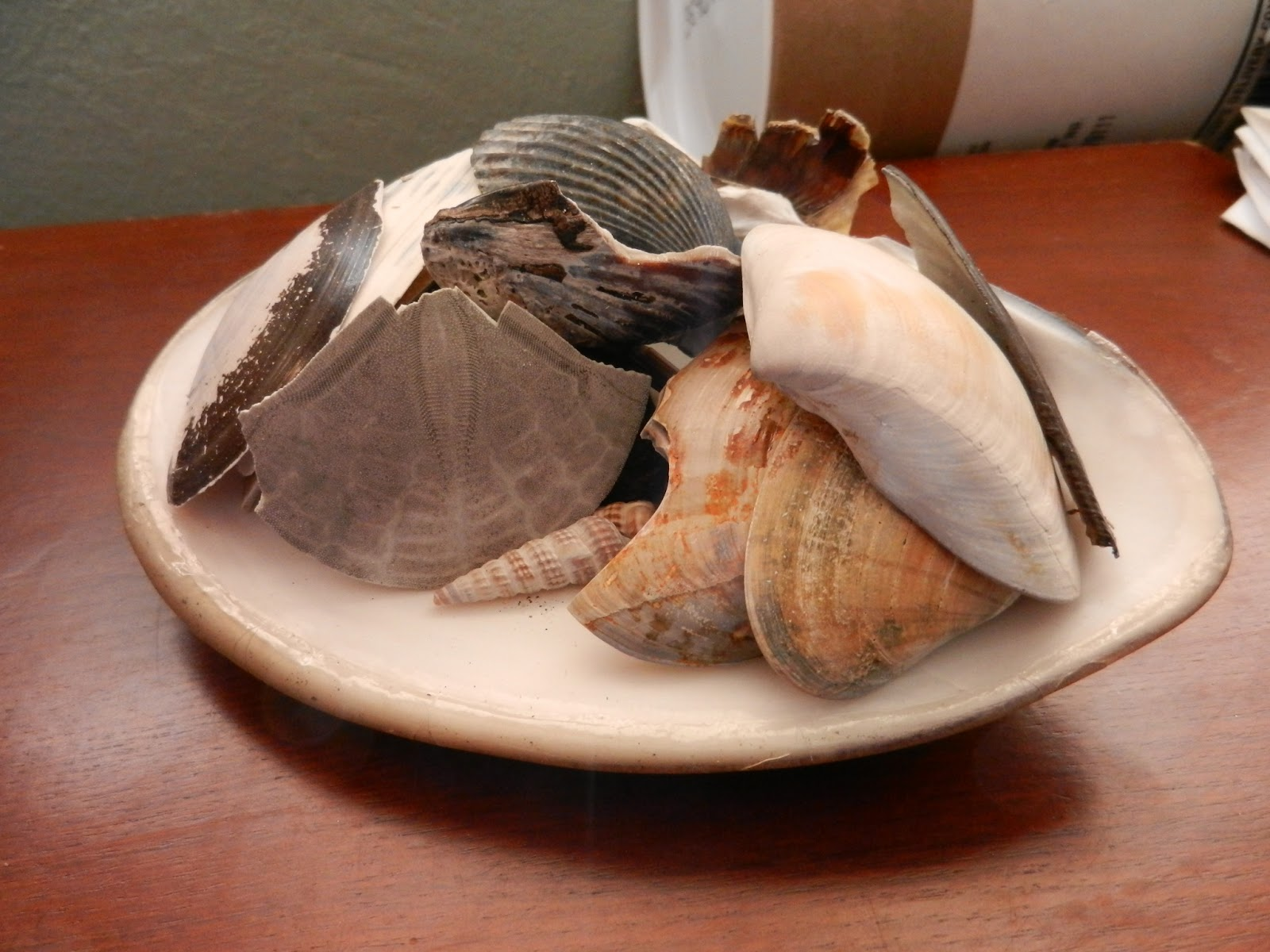 shell collection picture