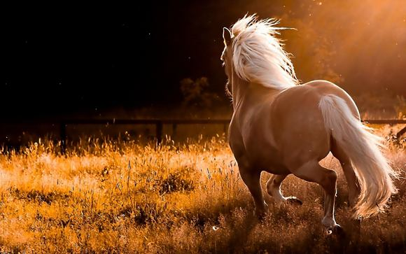 Horses Photo Art Wallpaper 09