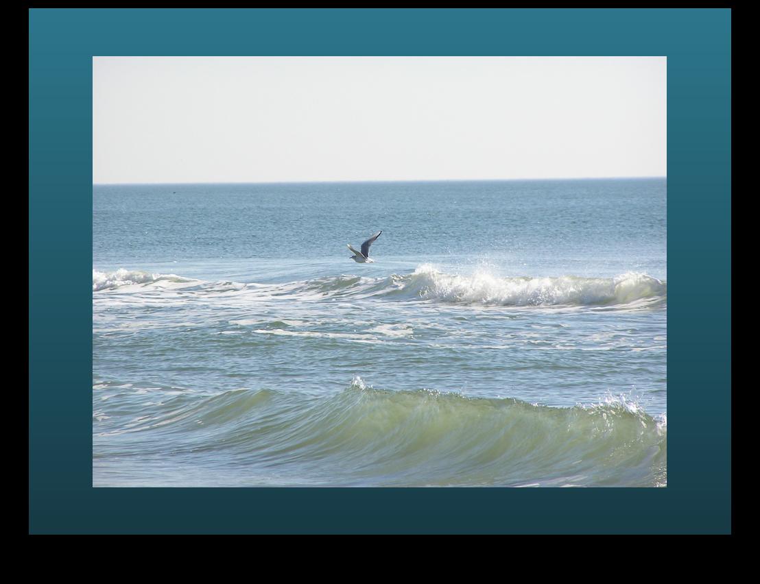Gull over Atlantic Ocean