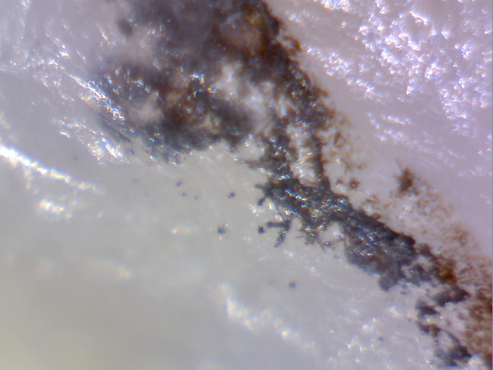 inclusions+in+quartz+019.jpg