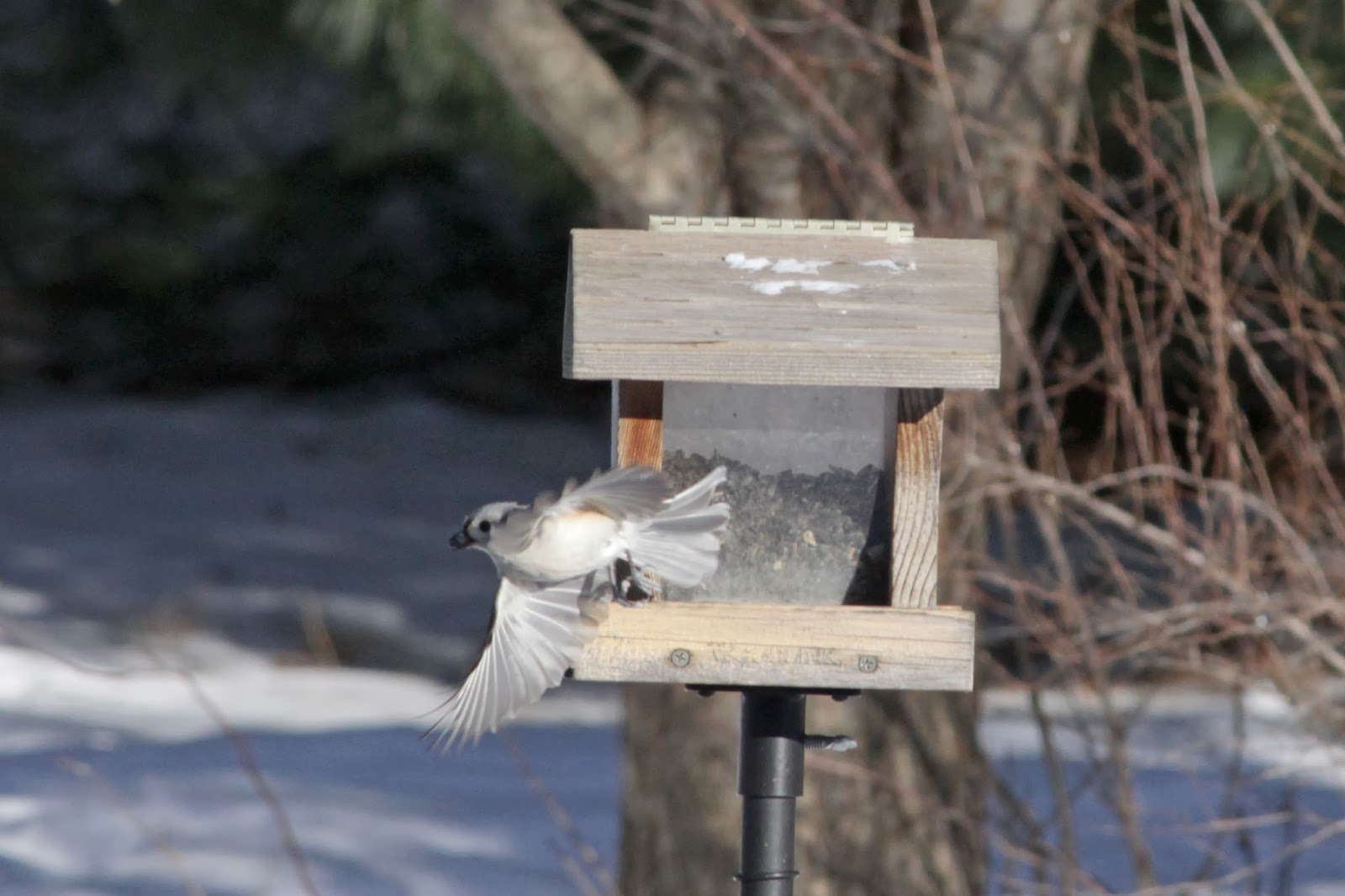 flying to feeder four