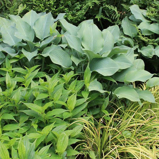 The rainforest garden 8 reasons to plant groundcovers for Low maintenance lawn plants