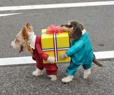 disfraza de perro original