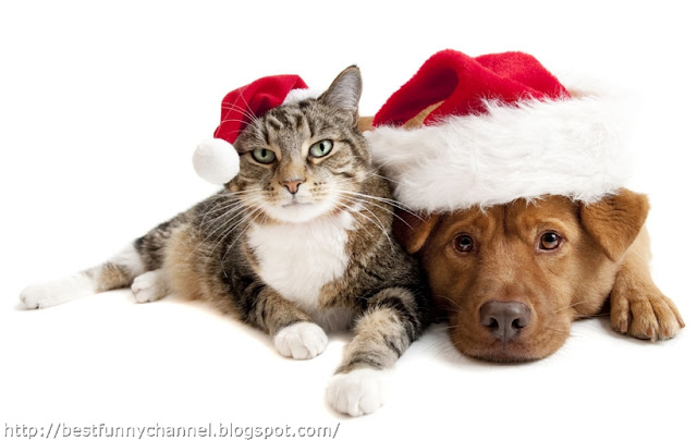 Christmas dog and cat.