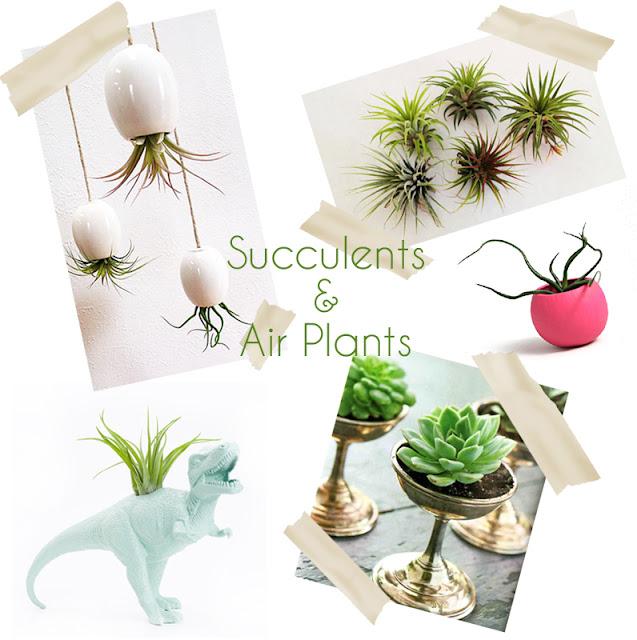 Succulents & Air Plants