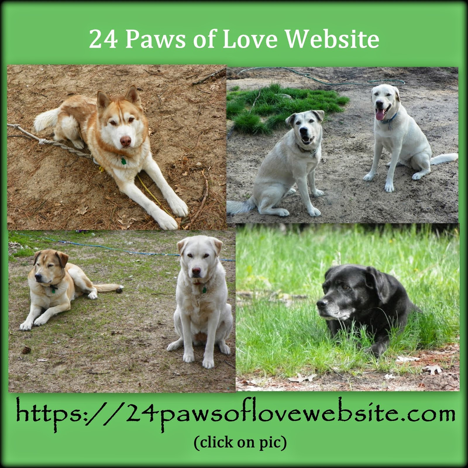 Visit the 24 Paws of Love Website