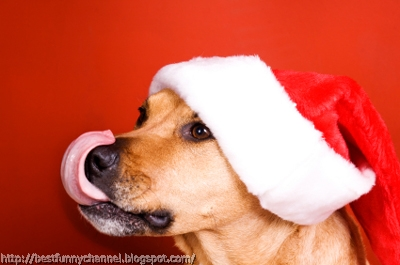 Funny dog in Christmas cap.