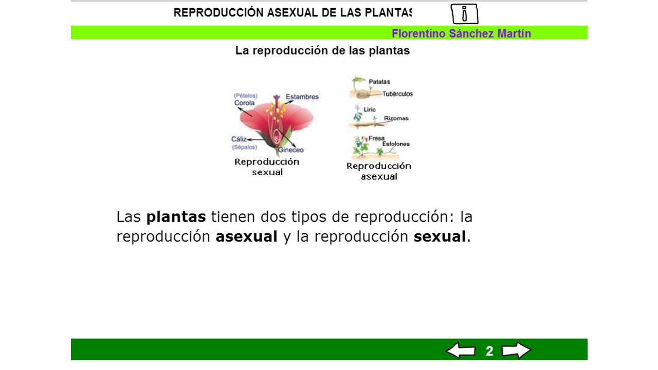 Cuarto grado de primaria la reproducci n asexual en las for Cuarto primaria