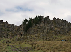 Bosque de piedras