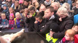 Http Animalpetitions Org Animal Petitions Now Utm Source Ap Nl Cat Holding Sign