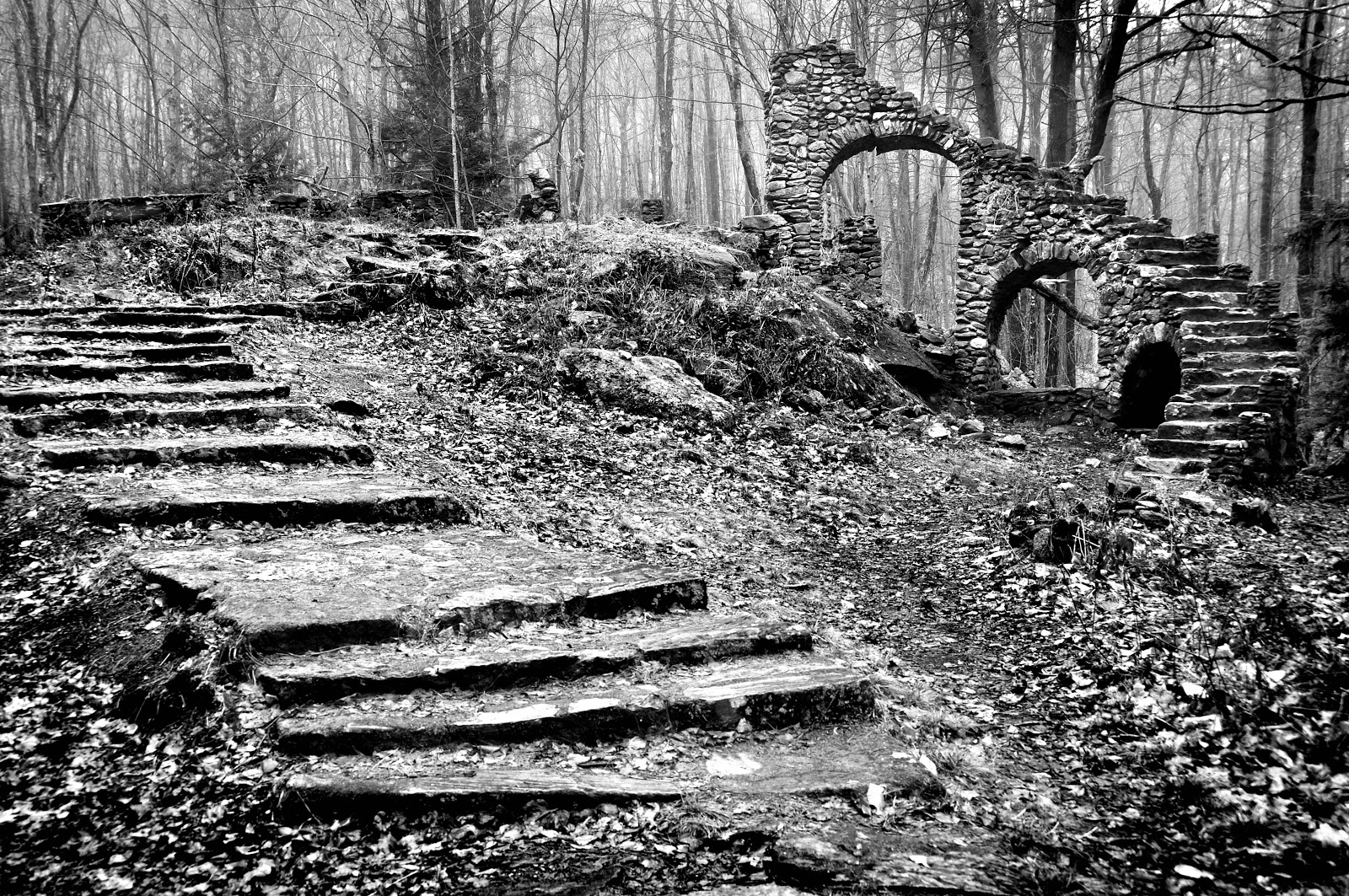 A Photographic Sage A Staircase In The Woods