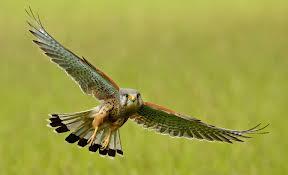 Dan tiadalah binatang-binatang yang ada di bumidan burung-burung yang ...