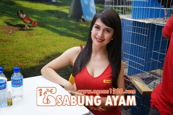 Hasil Pertandingan Arena AR1 Sabung Ayam S1228.net 14 November 2015