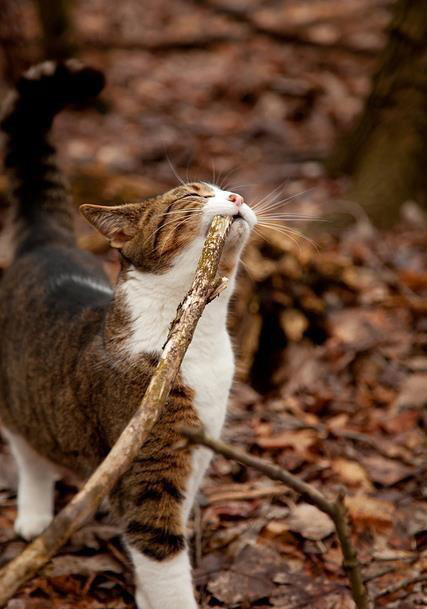 im u00e1genes de gatos - vol 7  17 fotos