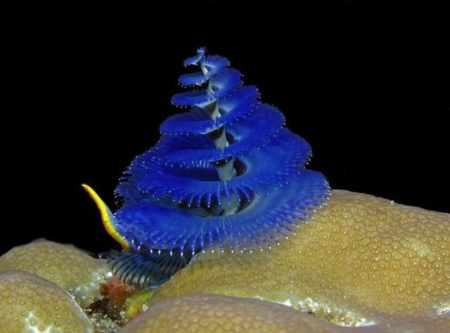 Most Beautiful Unseen Sea Creatures Seen   On www.coolpicturegallery.us