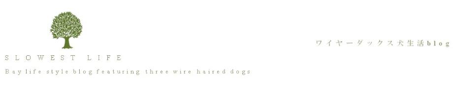 Slowest Life /・・\== ワイヤーダックスの犬生活blog