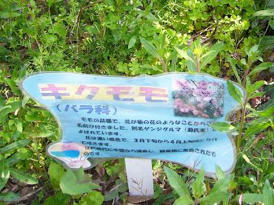 万博公園・キクモモ