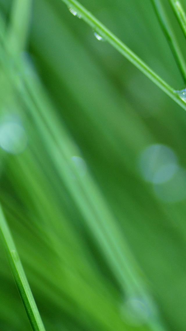download Grass Drops iPhone 5 HD Wallpaper