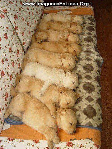 Perritos tiernos durmiendo