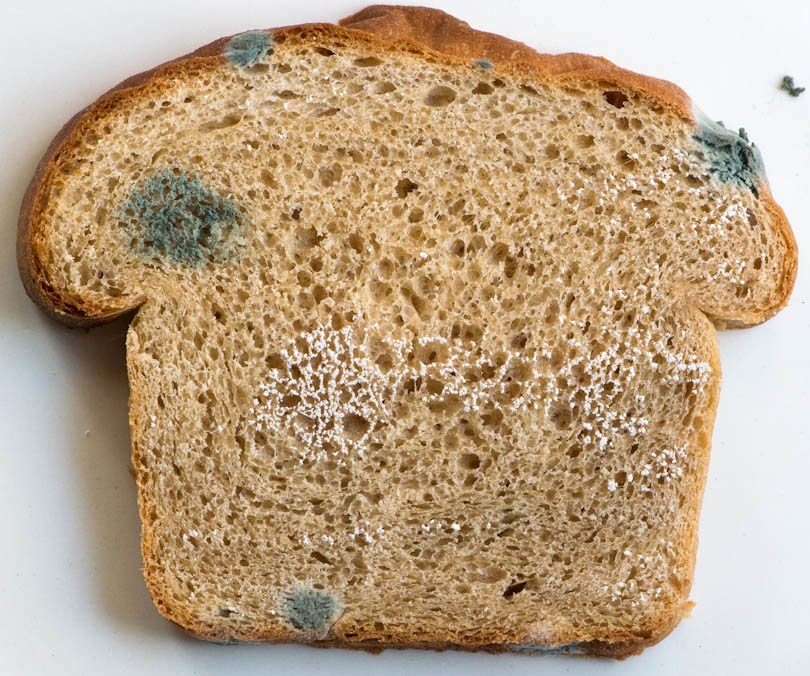 Foods Decoded: Solving a Moldy Bread