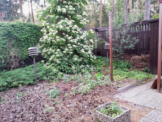 Puutarhasuunnitelma rivitalon takapihalle - lähtötilanne