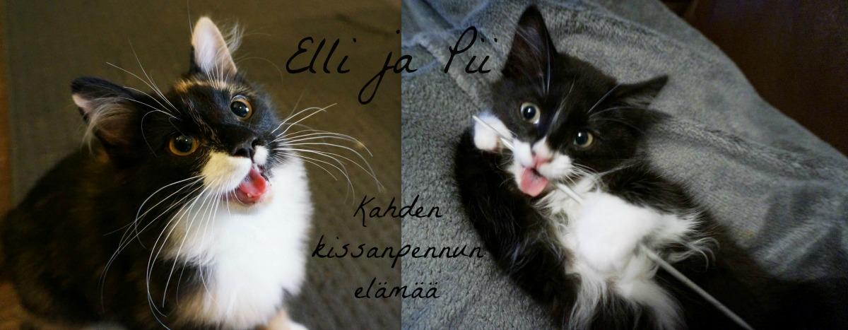 Elli ja Pii - Kissablogi