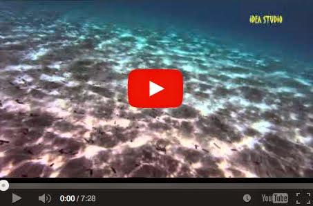 ΑΡΤΕΜΙΣ, ΑΓ ΝΙΚΟΛΑΟΣ - στην αγκαλιά της θάλασσας