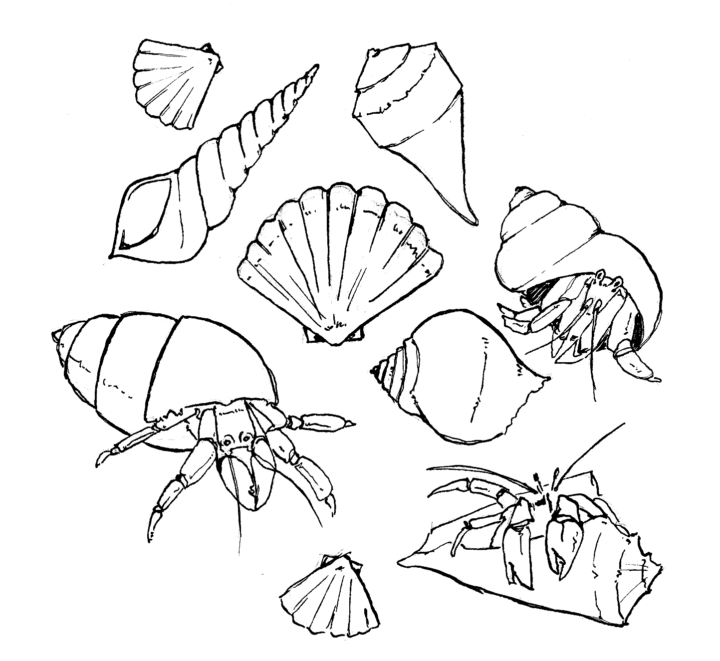 Free Coloring Pages Of Crabs And Shells