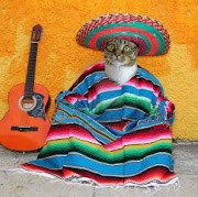 Happy Cinco de Mayo from Raz. I'm taking requestswhat would you like to . (raz cinco de mayo)