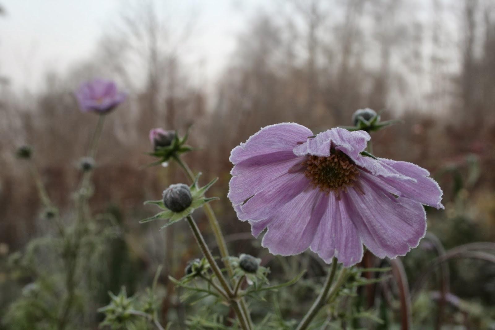 blogg blommor