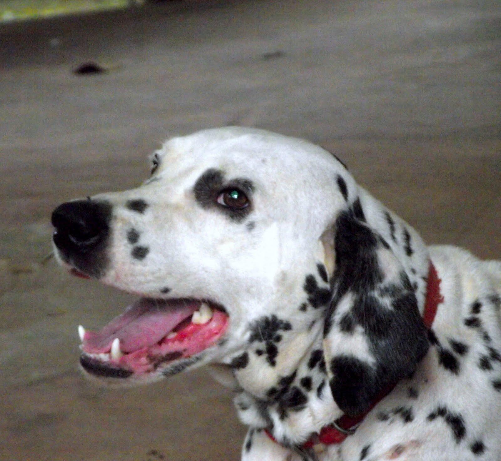 Christy Good Dogs Nashville