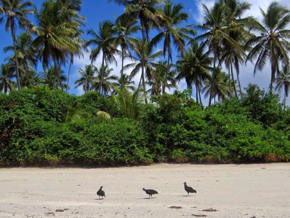 Vegan montr al des oiseaux au br sil for Portent traduction francais