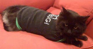 black dressed cat