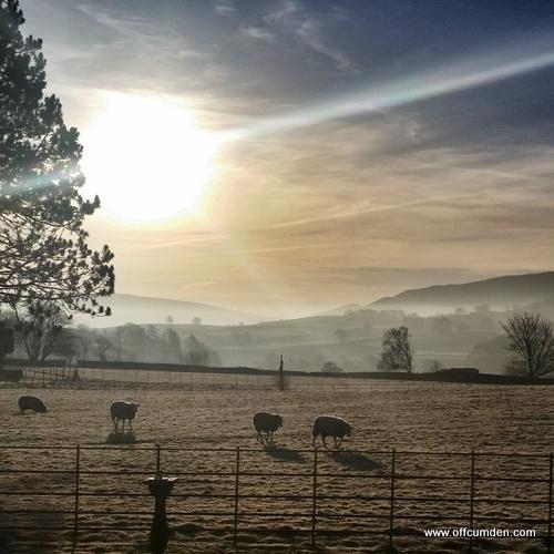 Yorkshire Dales sunrise sheep