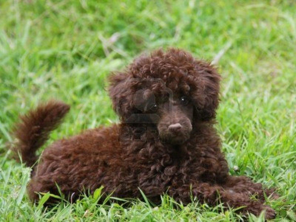 Cute Puppy Dogs: cute ...
