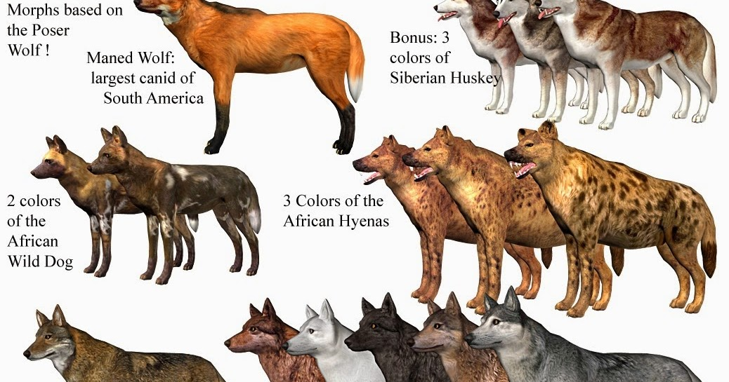 Dogs Came From Wolves Cats Come From