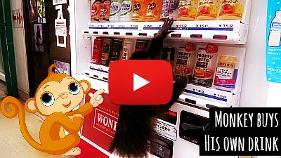 Adorable little Capuchin monkey in diapers buys his own drink from the vending machine by grabbing some coins from his owner at Tohoku Safari Park in Japan via geniushowto.blogspot.com funny pet videos